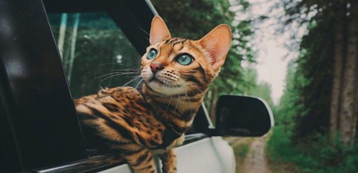SOCIÁLNÍ SÍTĚ MILUJÍ kočičího dobrodruha Suki