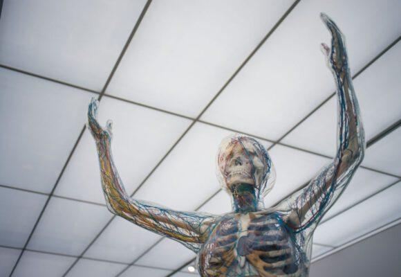 17 zajímavostí o lidském těle