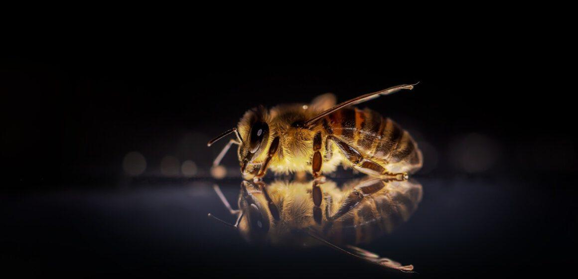 Význam včel: Bez nich je příroda bezmocná