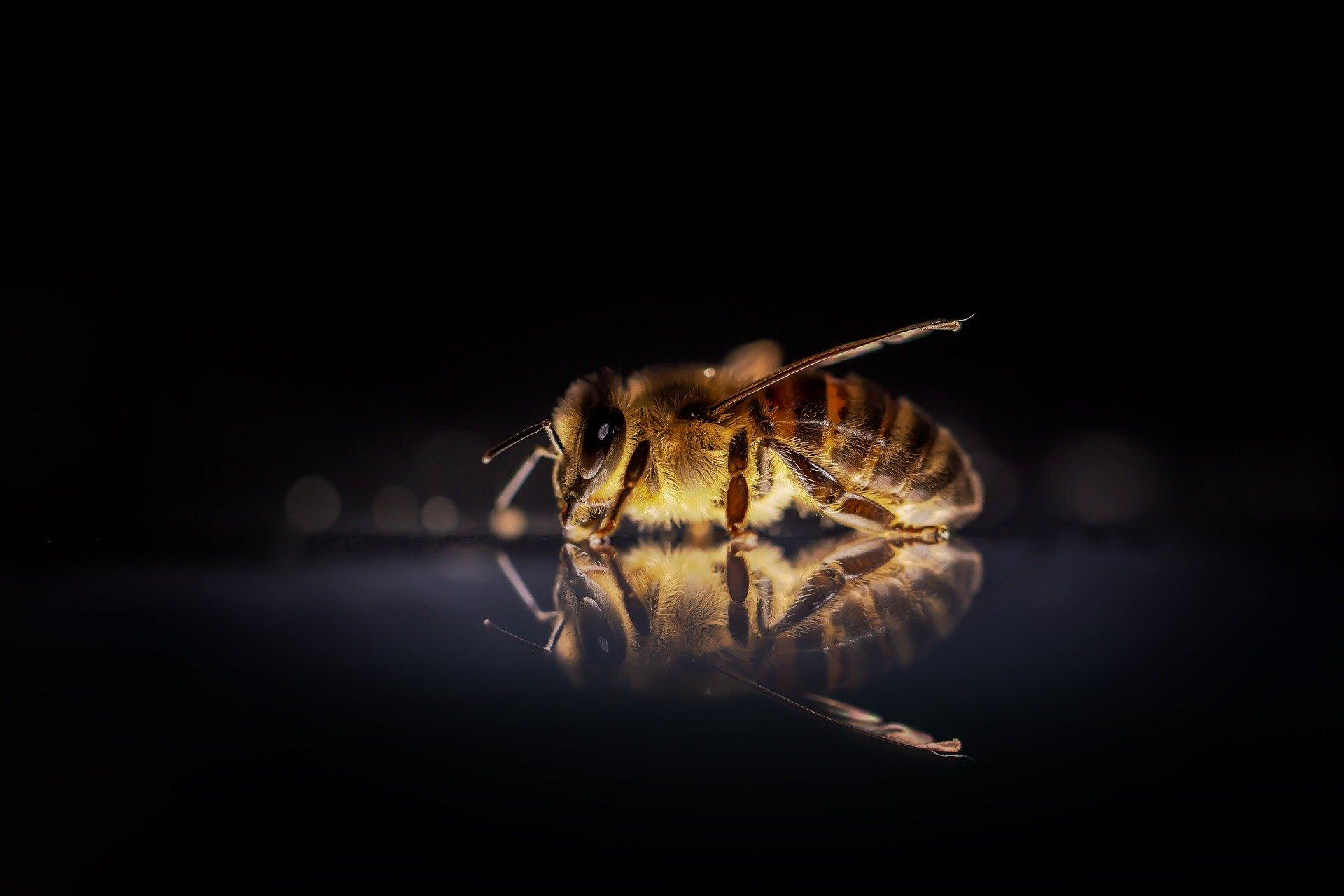Význam včel